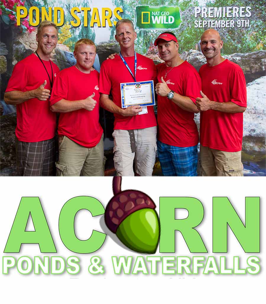 KOI Pond Cleaning Contractor Of Rochester New York - Acorn - 585-442-6373
