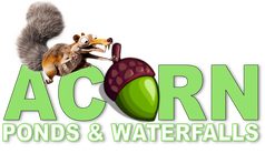 New York Koi Pond & Watergarden Maintenance Contractor - Acorn Ponds & Waterfalls